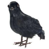 Decoratieve zwarte Kraai