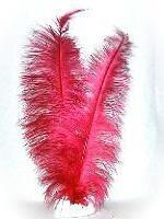 Veer spadonis rood mt 50 cm (pietveren)