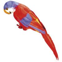 Rode decoratieve papegaai 30 cm